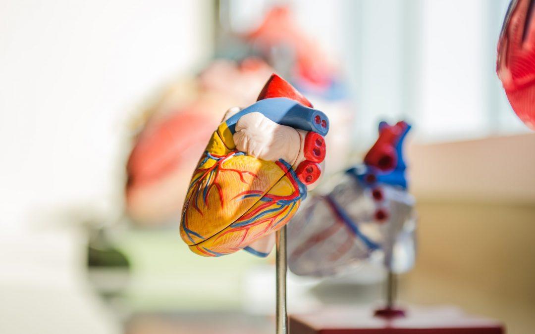 Ein gesundes Herz